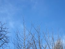 Empty trees, blue sky, clouds, nobody, Royalty Free Stock Photography