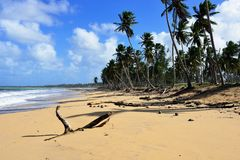 Playa Limon beach on Dominican Republic. The empty, tropical long Limon beach on Dominican Republic Stock Photography