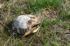 Empty turtle shell. In the steppe among the grass stock photography