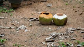 Empty two coconuts on the sand floor. Empty two coconut on the sand floor with rock dust grass leaves and other plant Stock Images