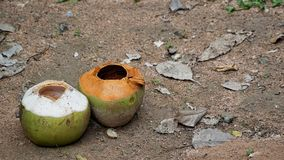 Empty two coconuts on the sand floor. Empty two coconut on the sand floor with rock dust grass leaves and other plant Royalty Free Stock Image
