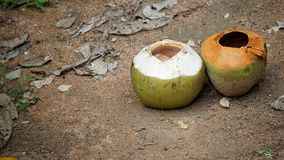 Empty two coconuts on the sand floor. Empty two coconut on the sand floor with rock dust grass leaves and other plant Stock Photography