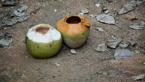 Empty two coconuts on the sand floor. Empty two coconut on the sand floor with rock dust grass leaves and other plant Stock Photo