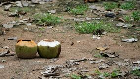 Empty two coconuts on the sand floor Royalty Free Stock Photography