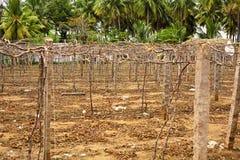 Empty vineyard Royalty Free Stock Image