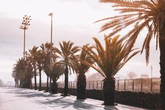Empty walking road in the Park with palm trees and benches on th. E sides, Sunny colorful day royalty free stock photography