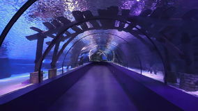 Empty walkway in aquarium. Shot of empty aquarium in Turkey, with some fishes and sharks swimming in water after feeding process stock video footage