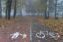 Empty walkway and bike lane in park with white road markings, covered with yellow leaves. Viewed from high angle, with foggy park stock image