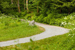 Empty walkway in scandinavian park, nature concept. Royalty Free Stock Photo