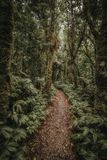 Empty walkway trail in tropical forest royalty free stock photos