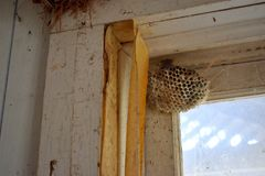 Empty Wasp Nest in Corner of Window. Empty wasp nest in the corner of the window of an old abandoned house Stock Photos