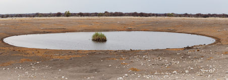 Empty waterhole in namibia game reserve Stock Photos