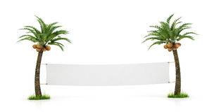 Empty white banner stretched between two palm trees. Royalty Free Stock Photo