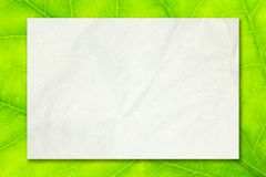 Empty white paper on green leaf background for business education and communication concept design.  Stock Photos