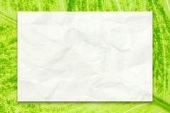 Empty white paper on green leaf background for business education and communication concept design.  Royalty Free Stock Photo