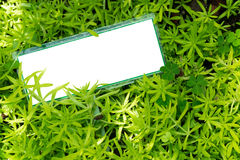 Empty white placard on small green plant. Crassulaceae succulent, angelina sedum. Empty white placard on small green plant. Crassulaceae succulent, angelina Royalty Free Stock Images