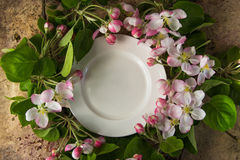 Empty white plate with spring blossom branches of apple tree top stock image