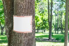 Empty white plate on tree in green park background. Square signboard, tablet, mockup on tree trunk in park. Warning white and red royalty free stock photos