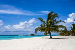 Empty white sands beach, Maldives Royalty Free Stock Photos