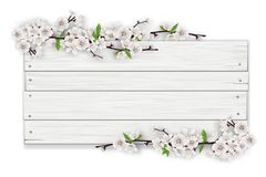 Empty white wooden sign with blooming tree branch. Empty white wooden sign on a blossoming tree branch frame background. The template for a banner or an Stock Photos