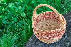 Empty wicker basket on trunk of fallen tree. With green grass in the background stock image