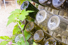 Empty wine bottles in a wooden rack. Stock Image