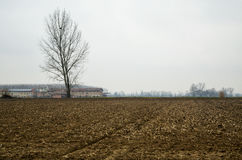 Empty winter fields with naked tree Stock Photos