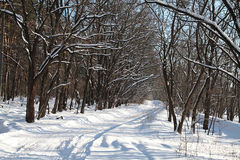 Empty winter road in the woods Stock Image