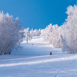 Empty winter sport resort view with snow, trees and blue sky. Cold weather in january Stock Photography