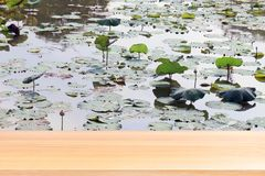 Empty wood table floors on lotus pad in pond garden farm background, wood table board empty front Lotus leaf pad green on water stock photos