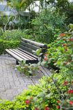 Empty wooden Bench in beautiful Park in Hong Kong Royalty Free Stock Photography