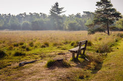 Empty wooden bench at the edge of moorland Stock Images
