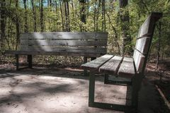 Wooden Bench on the side of a trail in the park. royalty free stock image