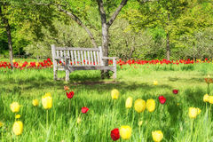 Empty wooden bench among fresh greenery in a park stock images