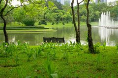 An empty wooden bench on green grass lawn among pink Siam Tulip flower under the trees beside a lake facing a fountain in a pond. Building and white sky on royalty free stock images
