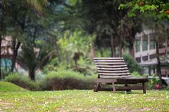 Empty wooden bench. Empty wooden bench on green lawn in the garden Royalty Free Stock Photography