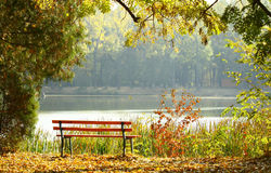 Empty wooden bench in the park. Near lake stock images
