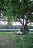 Empty wooden bench under a tree. On a calm summer evening stock photo