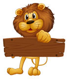An empty wooden board brought by the lion Stock Images