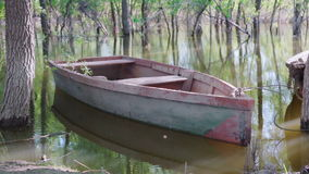 Empty wooden boat on the lake among the trees stock video