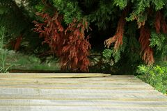 Empty wooden deck table with foliage bokeh background. Ready for stock photography