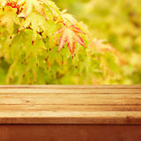 Empty wooden deck table over autumn leaves Royalty Free Stock Photo