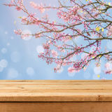 Empty wooden deck table over blurred bokeh spring tree background for product montage Stock Image