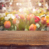 Empty wooden deck table over blurred tulip flowers background for product montage display. Spring Stock Photo