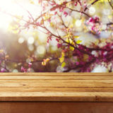 Empty wooden deck table over spring blossom tree background for product montage Royalty Free Stock Photo