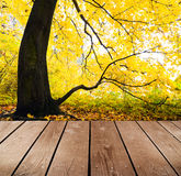 Empty wooden deck table in the park. Royalty Free Stock Images