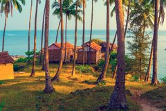 empty wooden houses among the tall trees in the resort. royalty free stock image