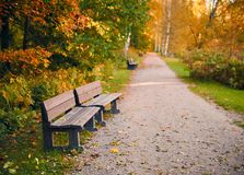 Empty wooden par bench in autumn scenery with fall colors Stock Image