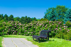 Empty wooden park bench Royalty Free Stock Photography