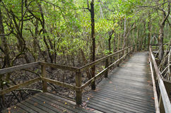 Empty wooden pat in Daintree National Park Queensland, Australia. Empty wooden path in Daintree National Park near Cape Tribulation in the tropical north of royalty free stock image
